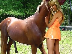 Sexy slut carrying-on at hand trained for sex brown horse